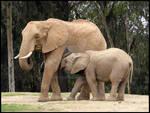 An Elephant's Child :D
