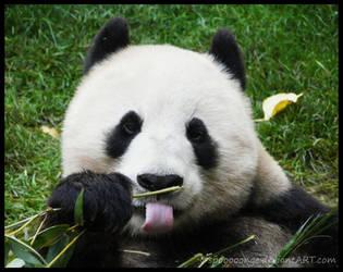 PANDA :P by spooooonge