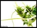 Dandelion Green 1
