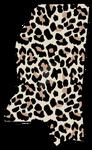 cheetah MS