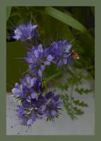 Meadow - Flower - Wiesenblume