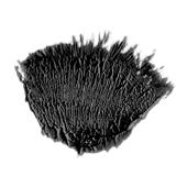 Brush001 resource 1 by Scipio1st