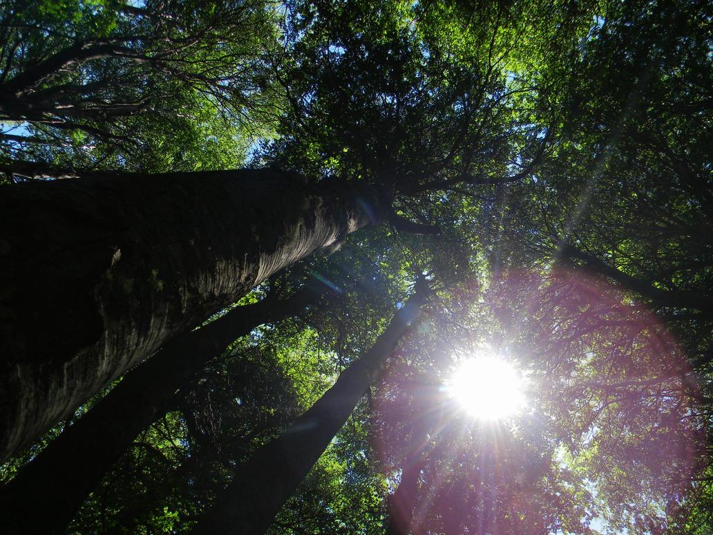 The sun through the trees by Tinten14
