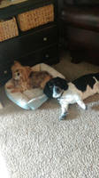 Dog buddies by moshigal156