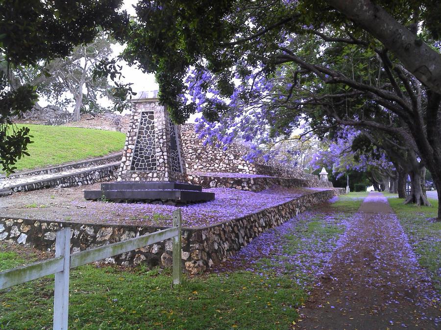 VIOLET - Page 3 Jacaranda_trees_in_bloom_by_kellyvenus-d4e7co6
