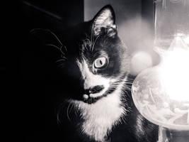 A cat in the Dark