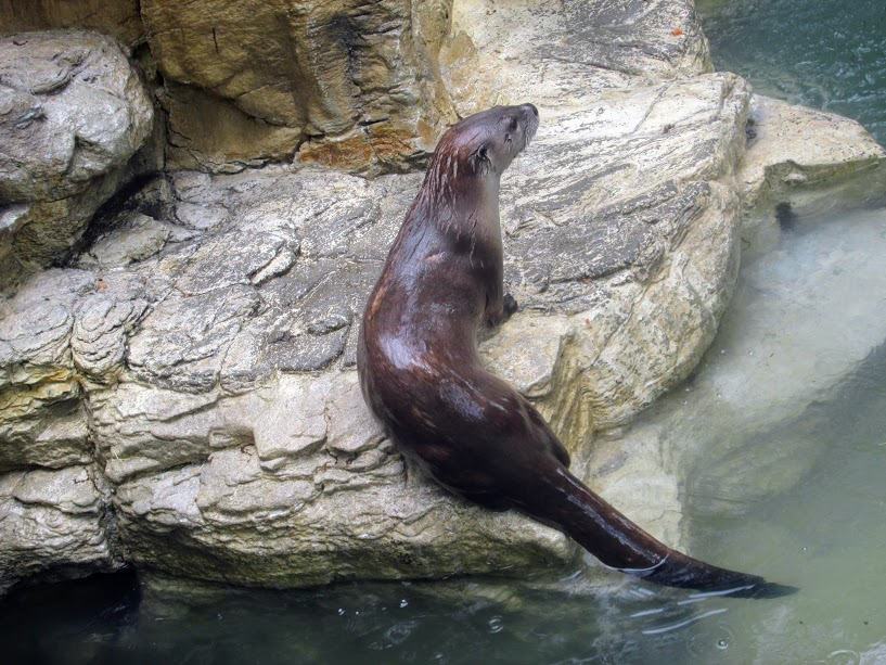Otter Spotting by KurtBeard