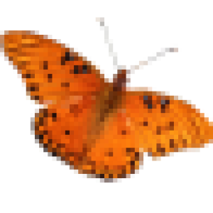 butterfly361's Profile Picture