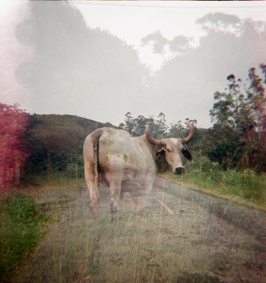 The cow and the road by clemlef