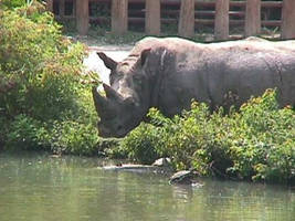 River Rhino by leopardwolf