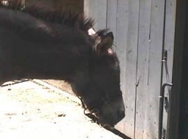 Dejected Mule by leopardwolf