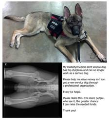 Service Dog - Help Needed by leopardwolf