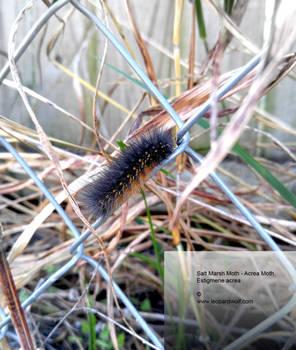 Halloween Caterpillar