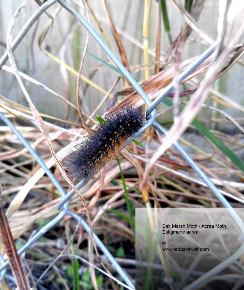 Halloween Caterpillar by leopardwolf