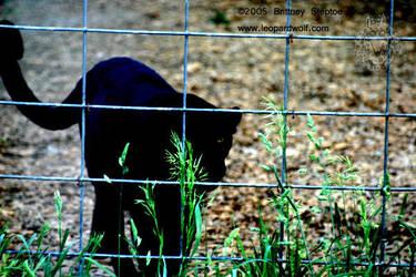 Restless by leopardwolf