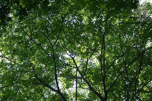 Leaf Filtered Light by leopardwolf