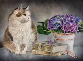 Cat and hydrangeas still life