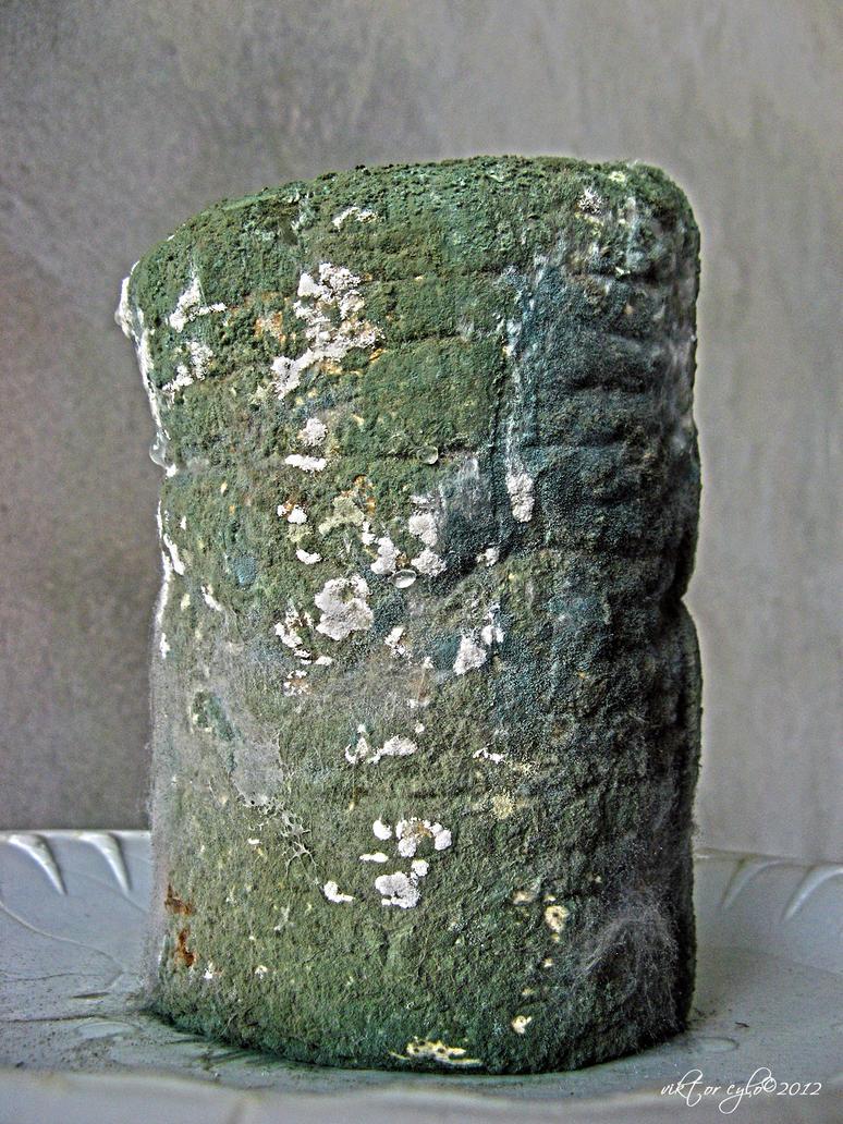 rotten bread-II by ViktorCylo