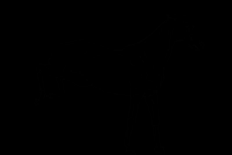 bucking horse lineart by folipoo