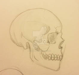 My friend, Mr. Bones