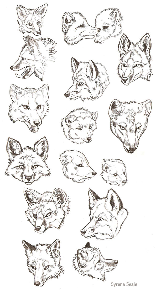 Sea fox mask