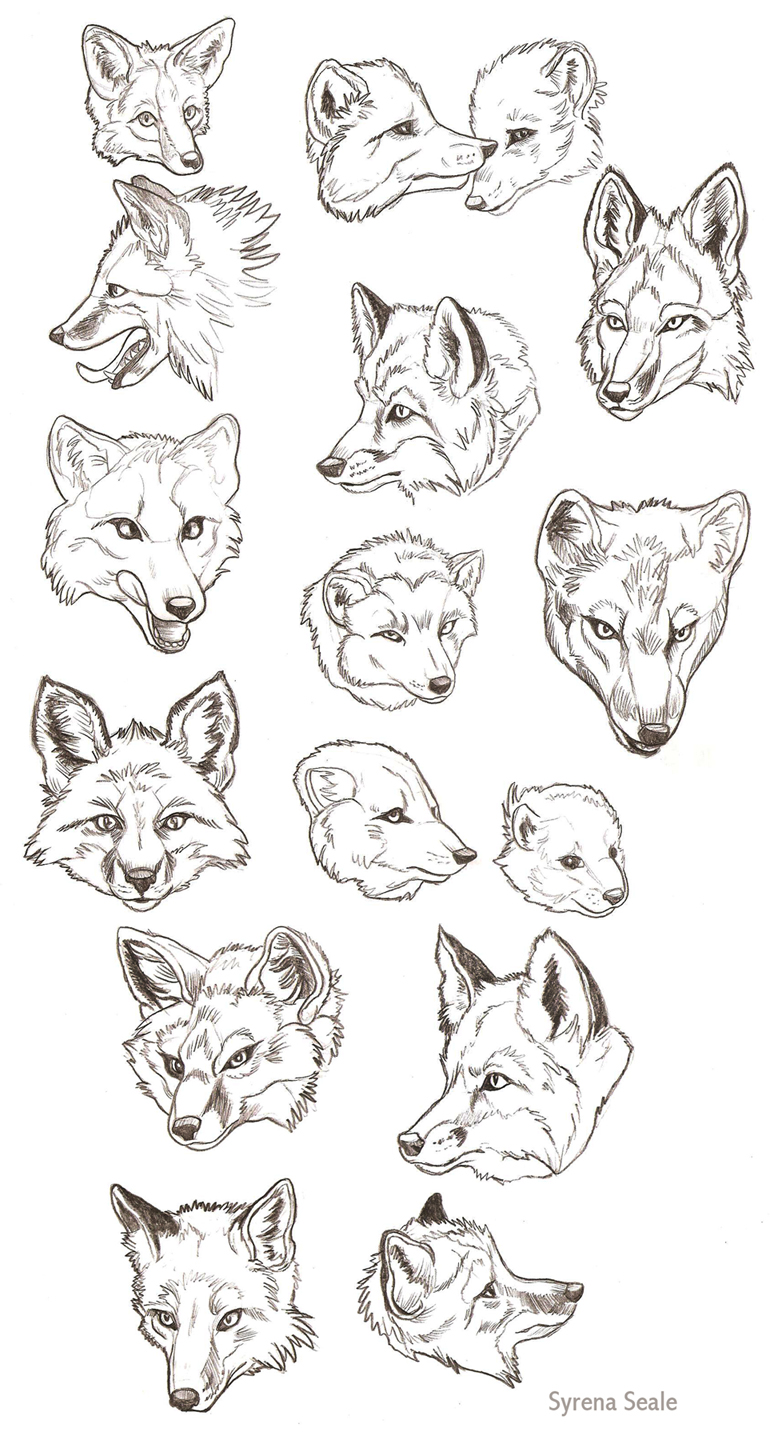 Fox Sketch Dump by SlayerSyrena on DeviantArtThree Headed Animal Drawing
