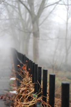Fog.Stock2
