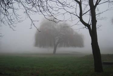 fog1.stock