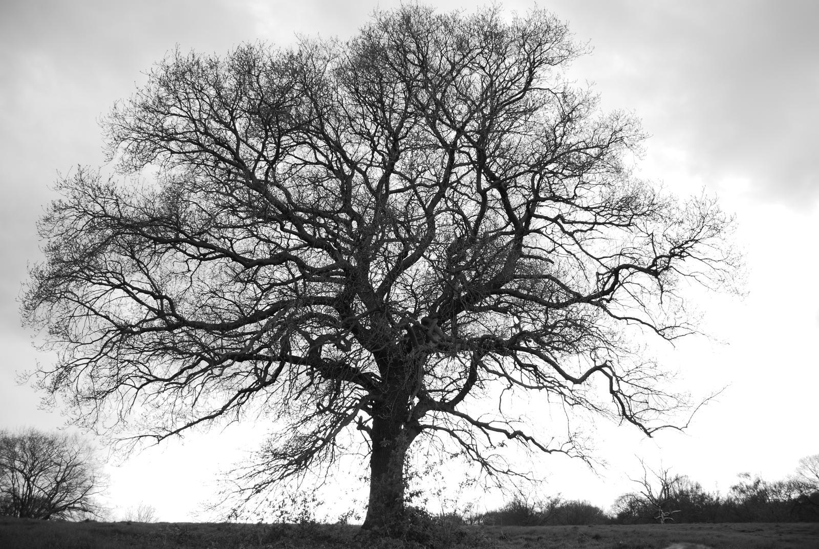 tree stock