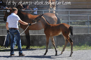 Foal Stock 5 by Champi-Stock