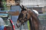 Foal Stock 10