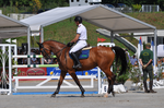 Show Jumping Stock 009