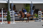 Show Jumping Stock 016 by Champi-Stock