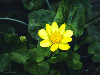 A yellow dot of life by lynhatminh1803