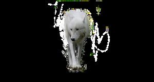 wolf pre-cut white by HaloReachFan123