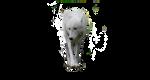 wolf pre-cut white