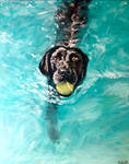 Bailey Swimming