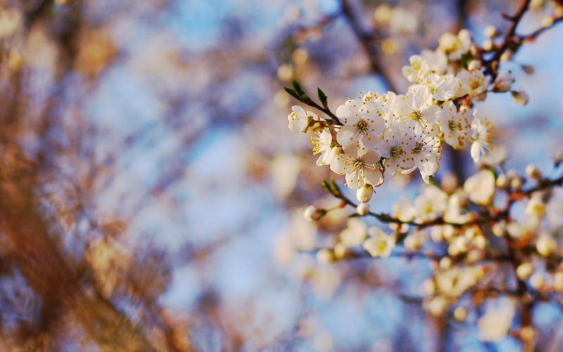 Spring wallpaper by zeenon