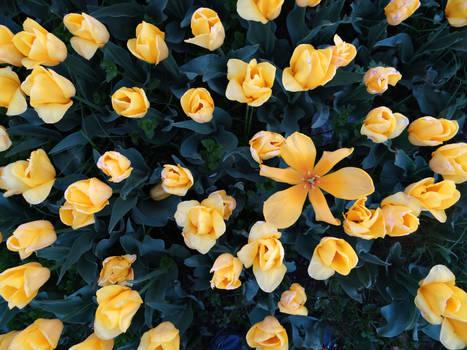 Yellow beginning