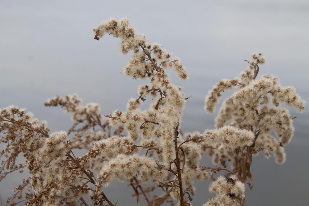 Shore Seed by wetdryvac