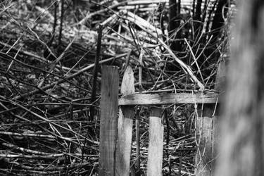 A Dead Fence