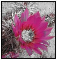 pretty in hot pink by xxemoxxstarxx