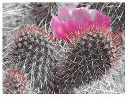 Love From Arizona by xxemoxxstarxx