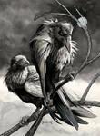 Silvar Ravens