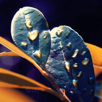 Liquid Gold by Lilyas