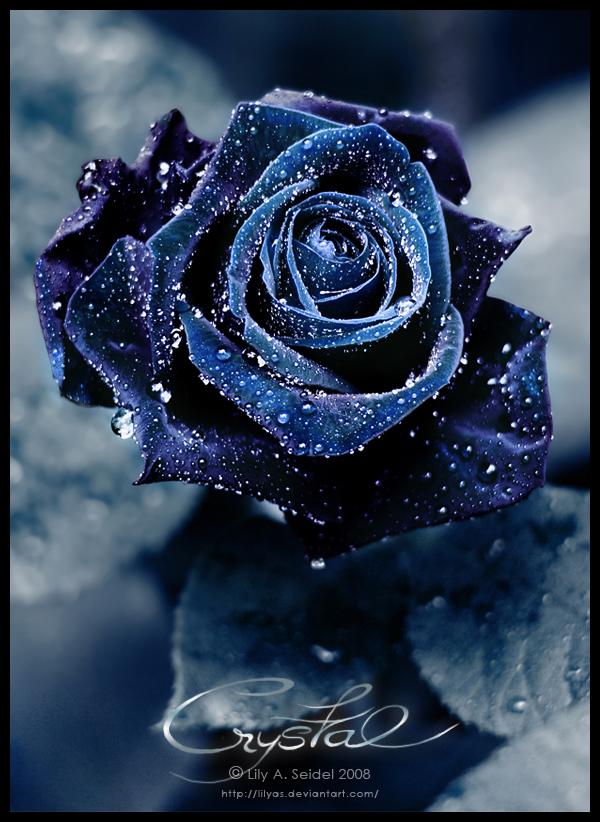 готически рози