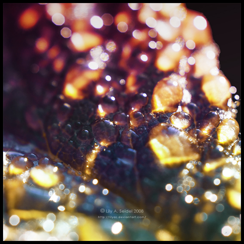 Morning Glitter by Lilyas