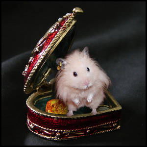 Hamster With Golden Earring