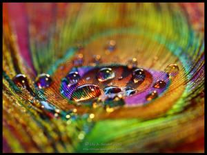 Magic Rainbow