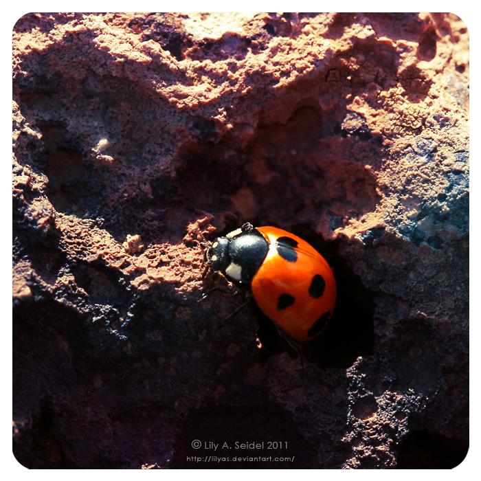 Ladybug by Lilyas